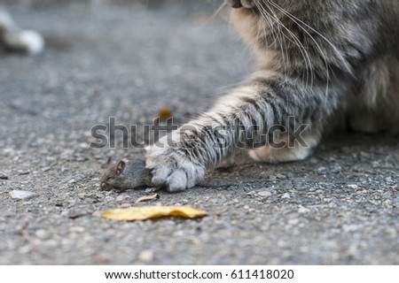 cats caught a mouse #611418020