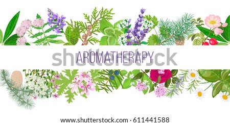 Big banner set of popular essential oil plants. Ornament with text aromatherapy. Peppermint, lavender, sage, melissa, Rose, Geranium, Chamomile, oregano etc. For cosmetics, spa, health care, perfumery #611441588