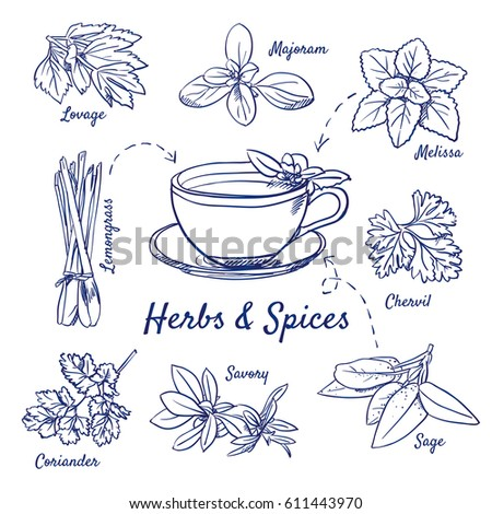 Doodle set of Herbs & Spices - Lovage, Marjoram, Melissa, Lemongrass, Chervil, Coriander, Savory, Sage, Tea cup, hand-drawn. Vector sketch illustration isolated over white background.  #611443970