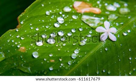 rain drop on the leave when raing #611617679