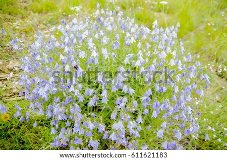 Flowers Of Khakassia #611621183
