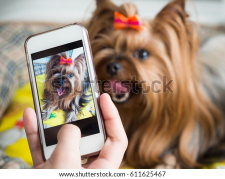 A woman's hand holds a smartphone and takes a picture of a little dog