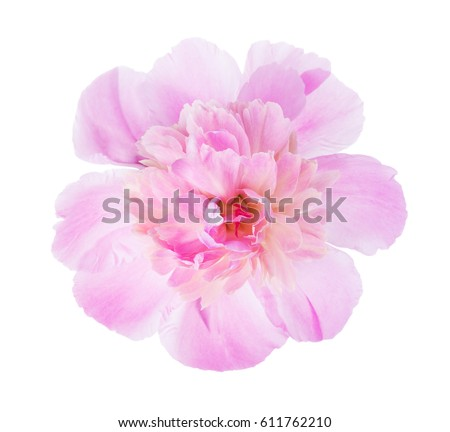 Pink peony  isolated on white background. #611762210