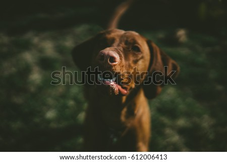 dog portrait #612006413