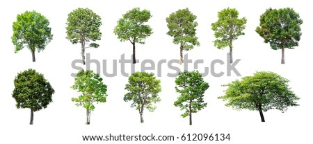 Isolated trees on white background , The collection of trees. Royalty-Free Stock Photo #612096134