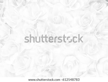 White Rose Background.