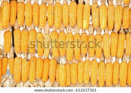Yellow corn decoration #612637361