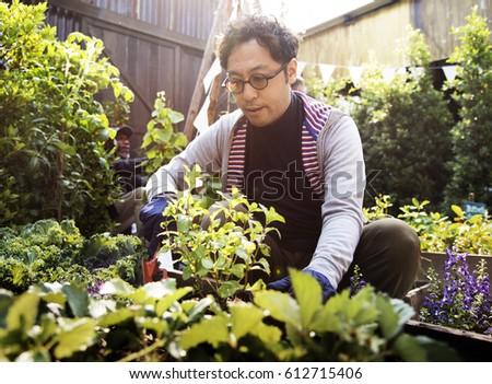 Man Harvesting Fresh Organic Vegetable #612715406