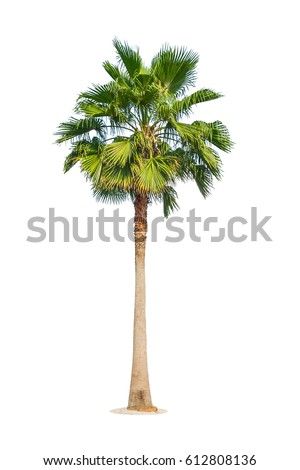 Palm tree isolated on white background. Clipping path included Royalty-Free Stock Photo #612808136