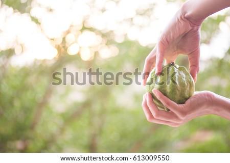 guava #613009550