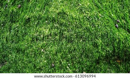 sea green moss #613096994