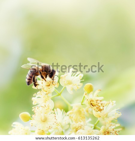 Honey bee pollinate yellow flower in the spring meadow. Seasonal natural scene. Beauty photo filter. #613135262