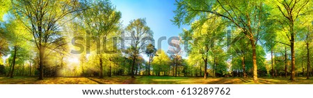 Gorgeous panoramic spring scenery with the sun beautifully illuminating the fresh green foliage Royalty-Free Stock Photo #613289762