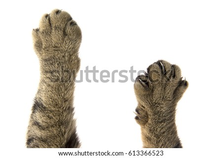 cat paws Royalty-Free Stock Photo #613366523