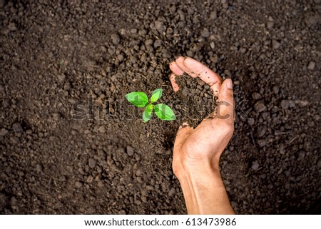 The young man's right hand is planting seedlings into fertile soil. #613473986
