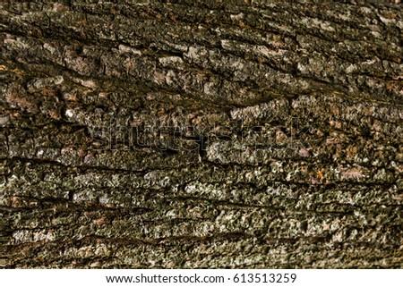 Wood tree bark texture background  #613513259