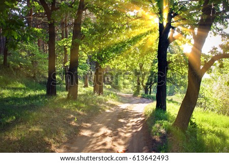 dirt road among the oak trees on a bright sunny day