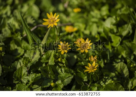 Yellow flowers in green #613872755