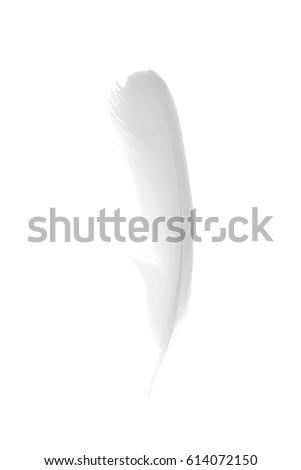 white feather on white background #614072150