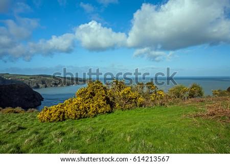 Rugged North Devon coast #614213567