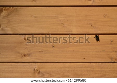 The texture of weathered wooden wall. Aged wooden plank fence of horizontal flat boards  with small bee sitting on them #614299580