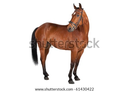 horse isolated on a white background #61430422