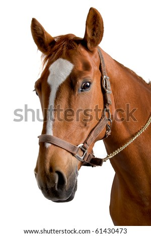 horse isolated on a white background #61430473