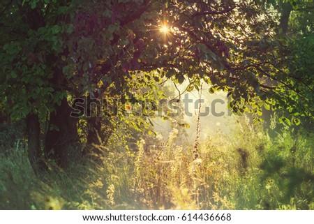 Summer forest at sunrise time. Inspiring summer background. #614436668