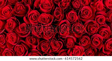 Natural red roses background #614572562