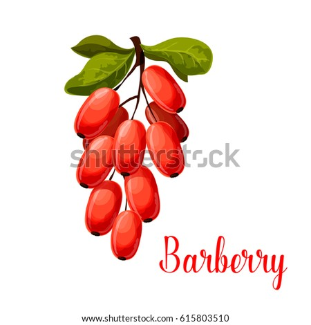 Barberry fruit branch isolated cartoon symbol. Fresh red berry of barberry with green leaves for natural healthy spice and condiments, vegetarian food, asian cuisine themes design Royalty-Free Stock Photo #615803510