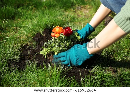Woman planting flowers in garden on sunny day #615952664