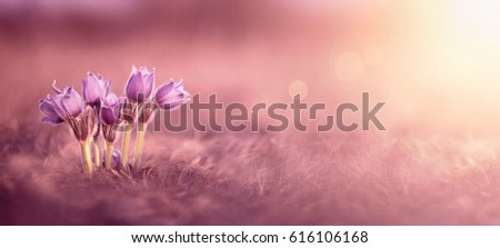 Pink spring flower banner with copy space #616106168