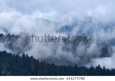 Misty mountain forest with the evergreen conifers view and low lying cloud near Swift Reservoir. USA Pacific Northwest, Washington. #616274780
