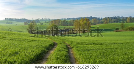 Panorama of spring, green field of young cereal #616293269