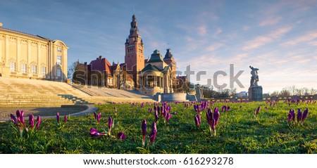 Crocuses blooming on Haken Terrace in Szczecin, Poland Royalty-Free Stock Photo #616293278