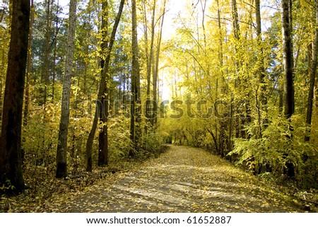 autumn forest #61652887