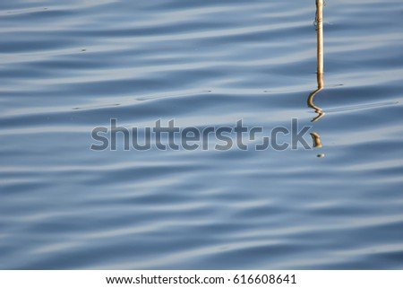 Water Surface and reflection of little wood , abstract  #616608641