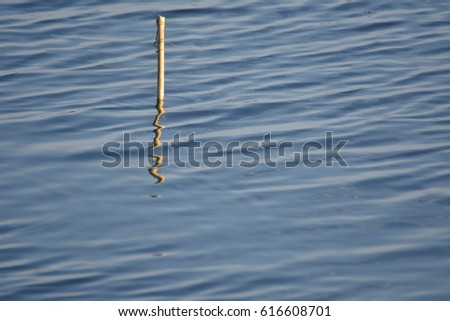 Water Surface and reflection of little wood , abstract  #616608701