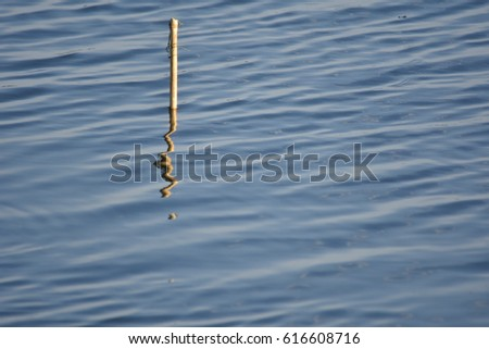 Water Surface and reflection of little wood , abstract  #616608716