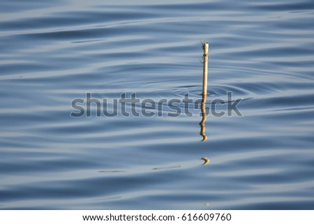 Water Surface and reflection of little wood , abstract  #616609760