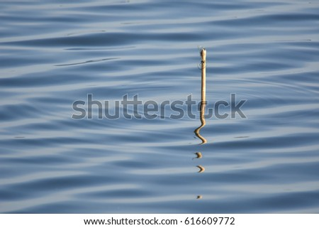 Water Surface and reflection of little wood , abstract  #616609772