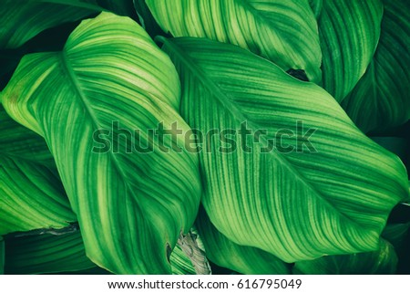 green leaves texture background #616795049