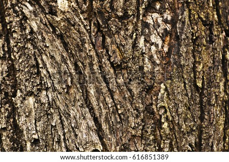 Wood Texture, natural look for artwork design  #616851389