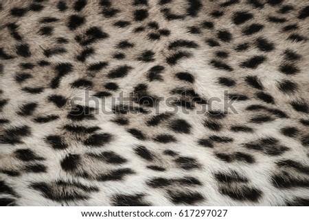 Leopard fur #617297027