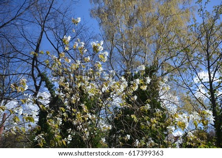 Spring Impressions from Berlin Spandau on April 6, 2017, Germany #617399363