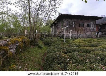 Ayder Plateau houses #617469215