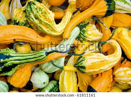 Basket with overflowing pumpkin #61811161
