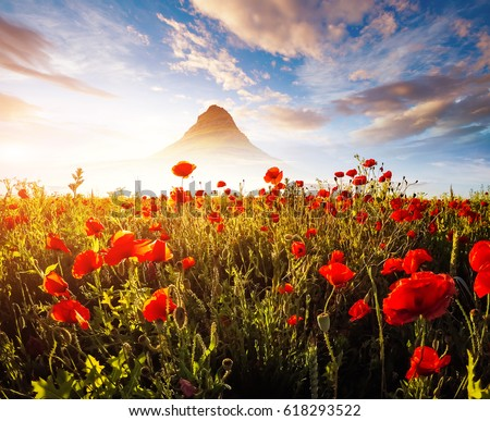 Blooming red poppies on field against the sun. Gorgeous and picturesque scene. Dramatic day and gorgeous scene. Wonderful image of wallpaper. Creative collage. Explore the world's beauty.