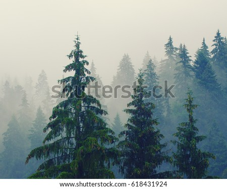 Foggy morning summer landscape with fir trees, seasonal travel hipster background #618431924