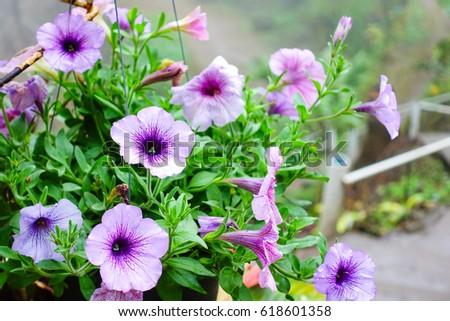 Beautiful flowers #618601358